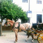 Seville Travel Inspiration Carriage parking in Seville