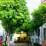 Seville Travel Inpiration Square with orange trees, Seville