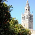 Seville Travel Inspiration The Giralda bell tower in Seville with orange trees