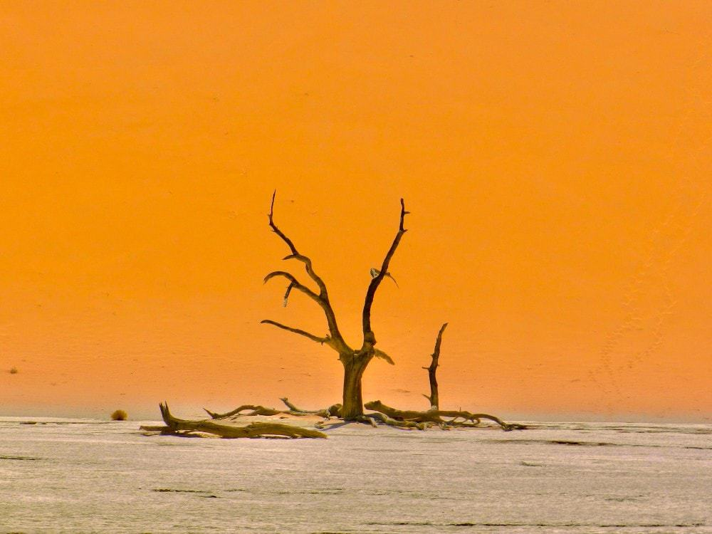 Sossusvlei Namibia tree dead vlei. 5th safest country in Africa