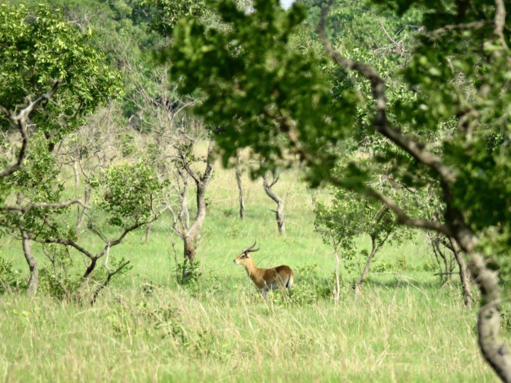 Shai Hills Resource Reserve Ghana Antelope