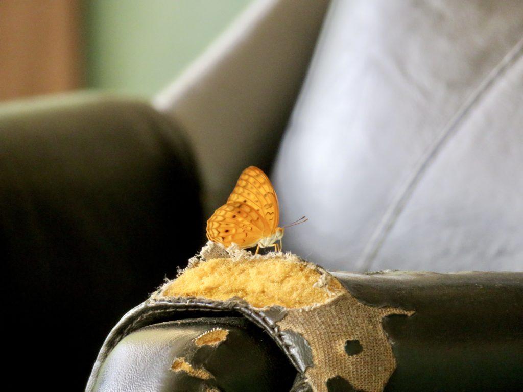 Shai Hills Resource Reserve Ghana Butterfly
