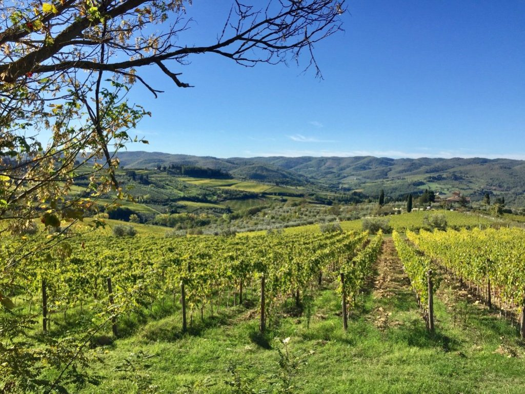Best Florence tours to Pisa and Chianti wine region