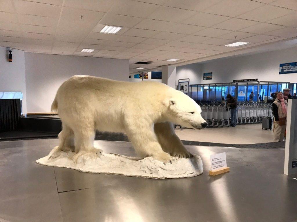 polar bear spitsbergen airport