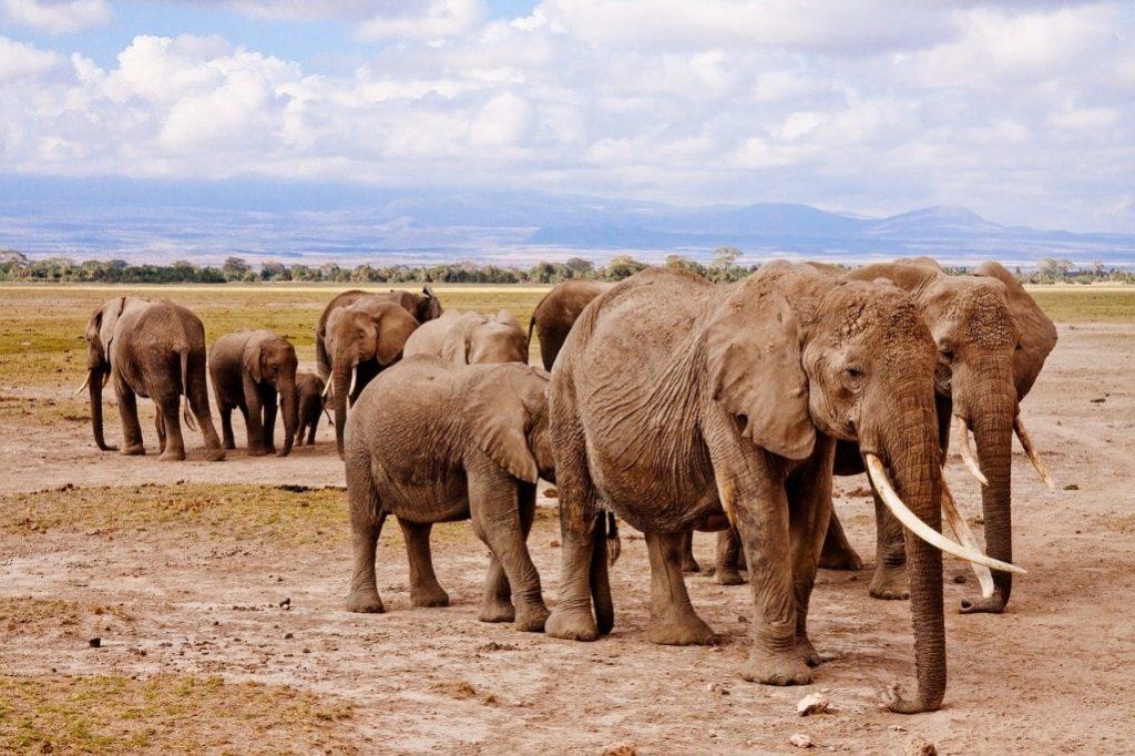 Maputo Special Reserve - Elephants