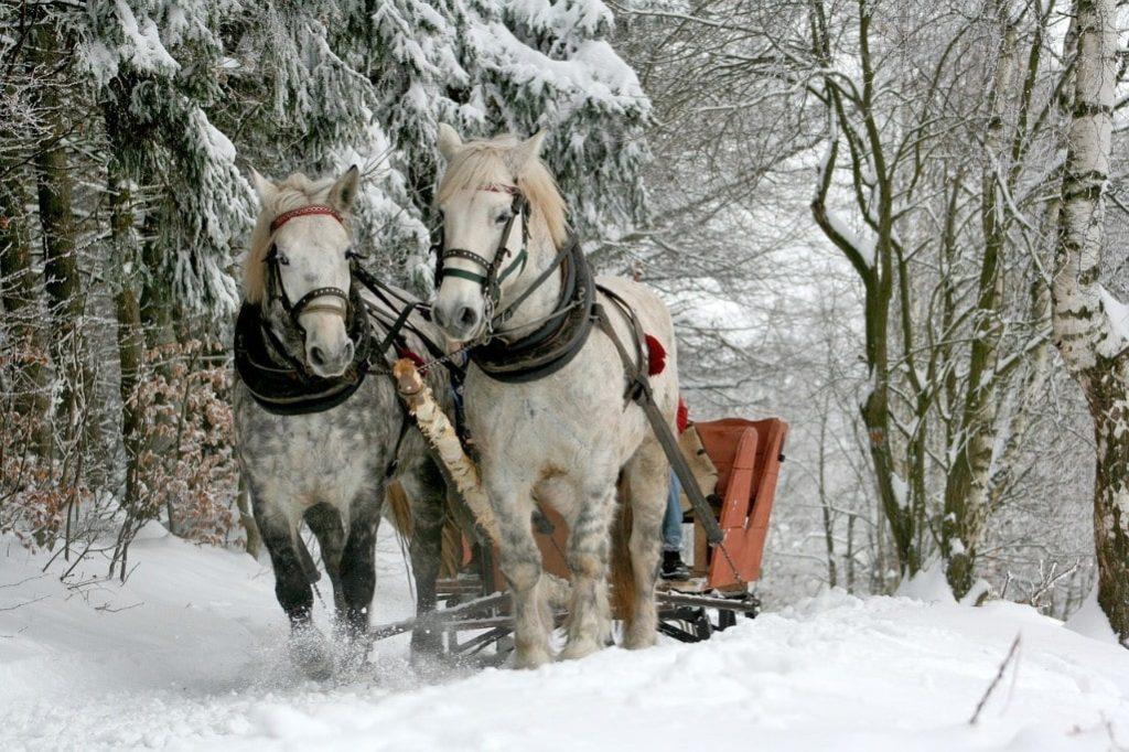 Sun valley sleigh ride