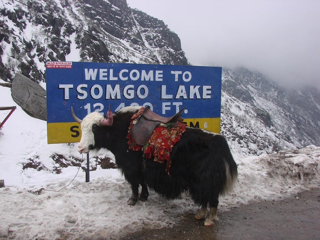 Riding a Yak in Tsomgo Lake is one of the best activities in Sikkim