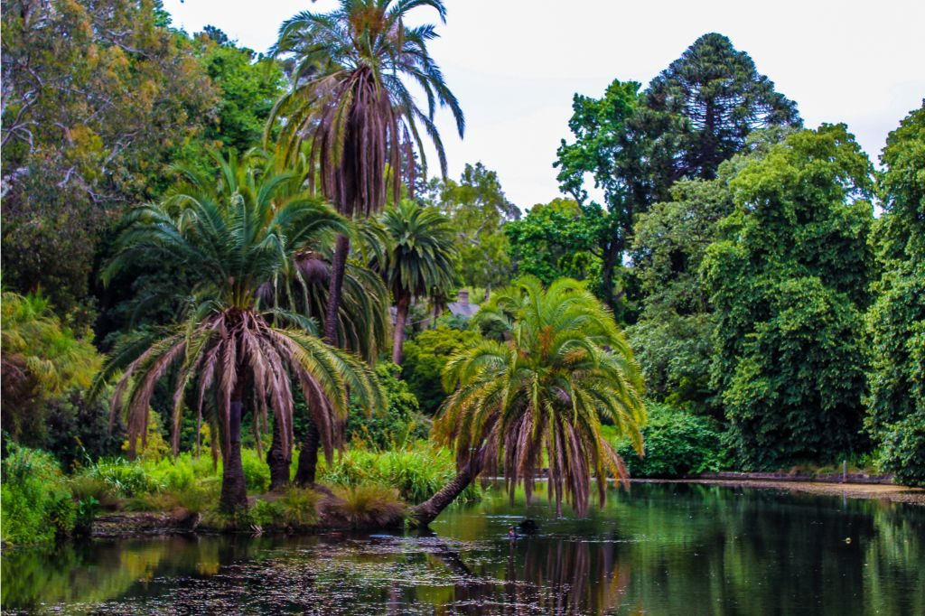 Melbourne itinerary - the botanical gardens are one of the top sights in Melbourne