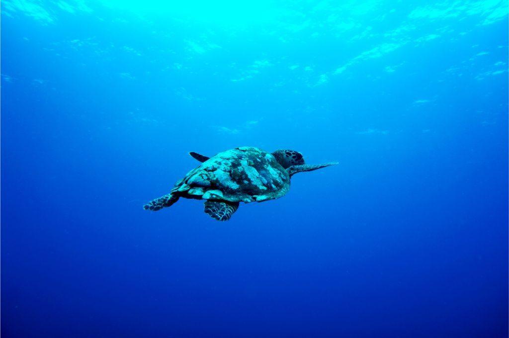 Underwater-life-at-Gili-Islands-Bali